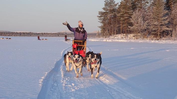 Winterurlaub auf der Huskyfarm in Lappland