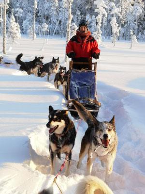 Ein Wintertraum in Lappland