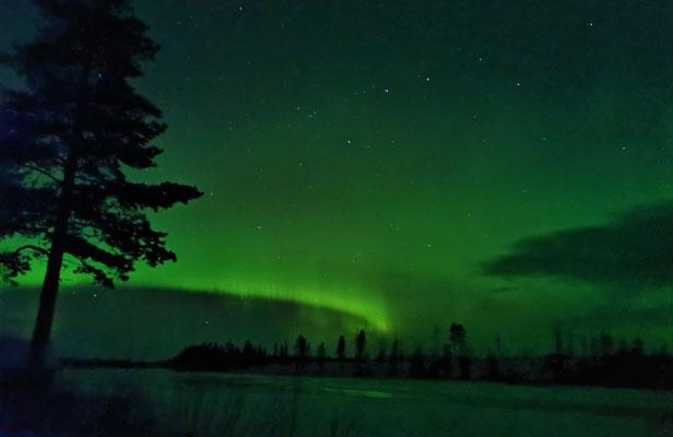 Nordlichter über der Huskyfarm Lapplands Drag