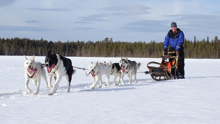 Schlittenhundetouren in Schweden erleben und genießen