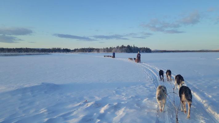 Huskytouren in die Weiten Lapplands
