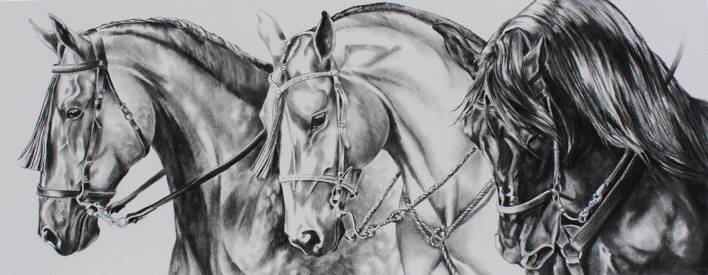 CABALLOS DE COSTA RICA, charcoal on canvas 24 x 60 (61cm x 152cm)