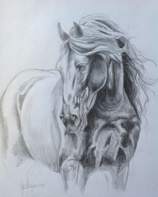 CHEVAL DE PRINCE, charcoal on arches paper 24 x 30 (61cm x 76cm)