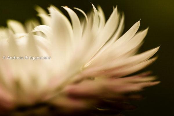 Theas flower_06