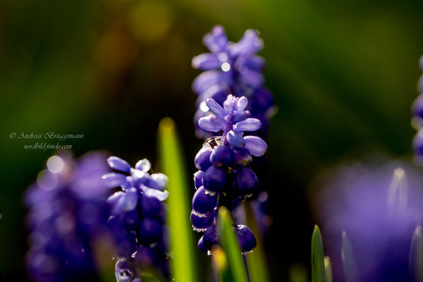 Blue in the evening light_2