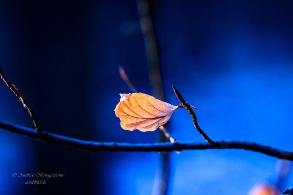 Winter light_7