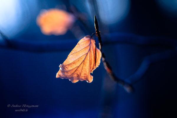 Winter light_8