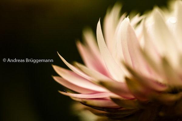 Theas flower_07