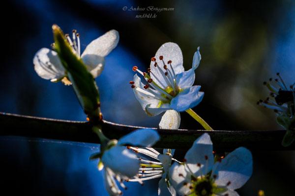sunshine in April-6