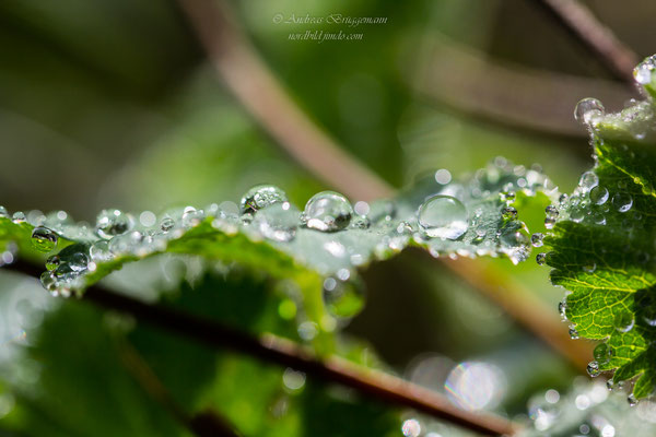water drops in the evening light