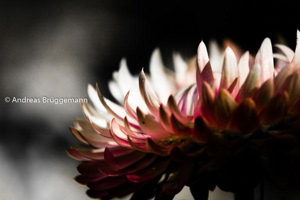 Theas flower_02