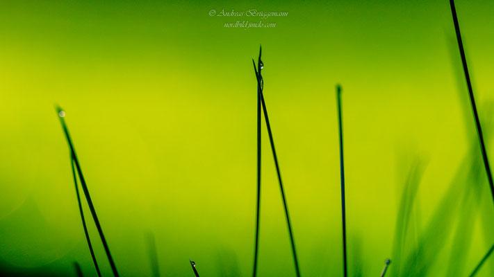 green_4