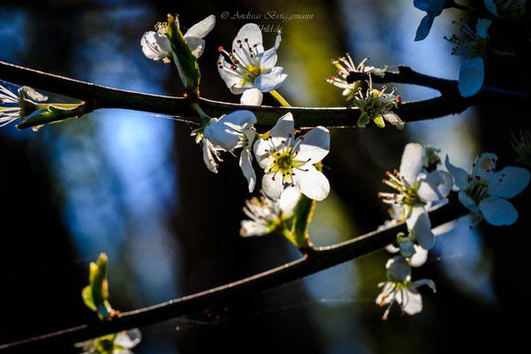 sunshine in April-4