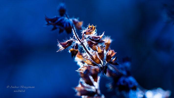 Winter light_3