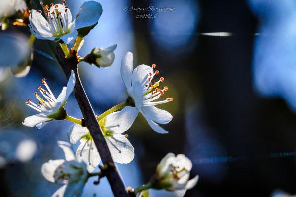sunshine in April-7
