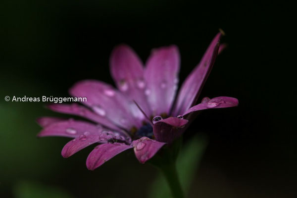 after the rain_01