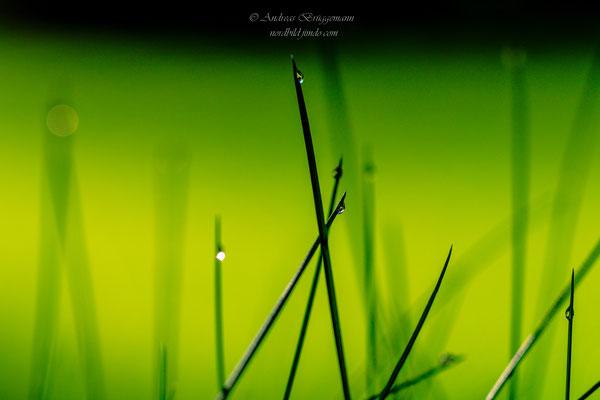 green_1
