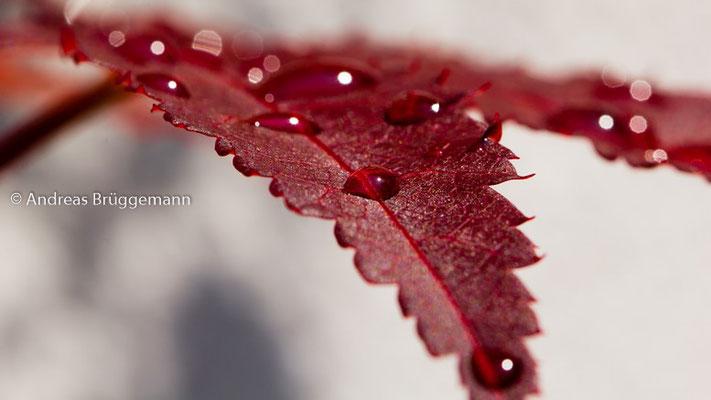 drops on read leaf_01