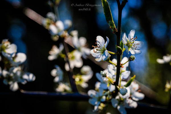 sunshine in April-3