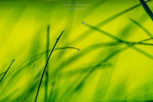 green_5