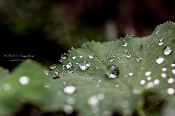water drops_6