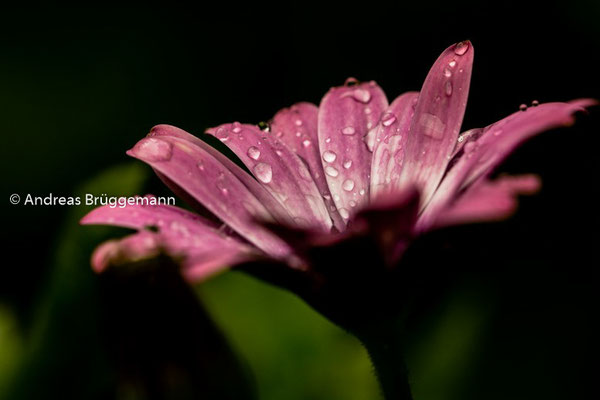 after the rain_05
