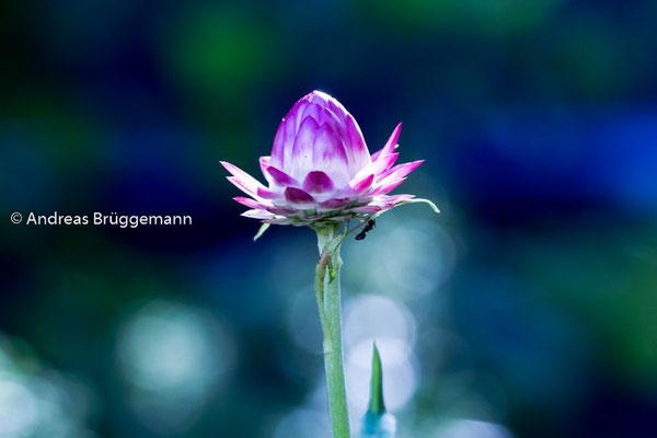 Theas flower_08