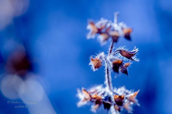 Winter light_4