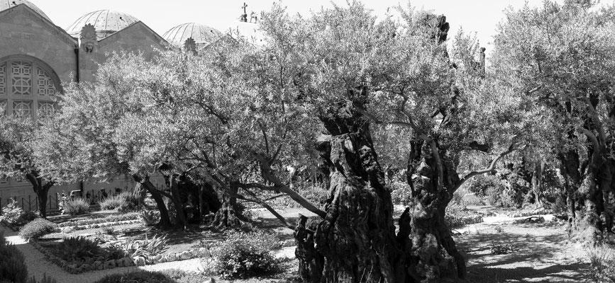Der Garten Gethsemane