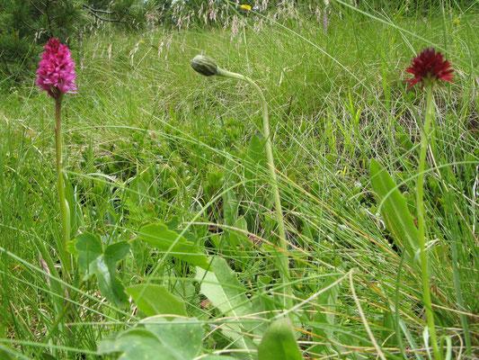 Val da Camp GR, 13.7.2007