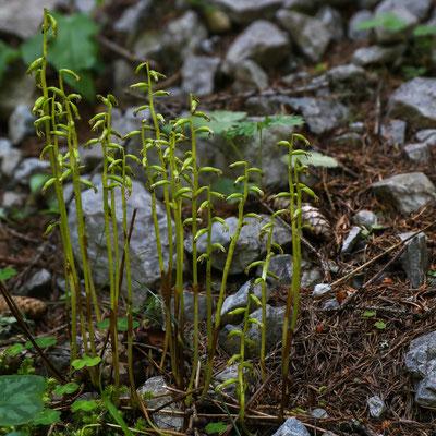 Unterengadin Val d'Uina GR, 4.7.2019