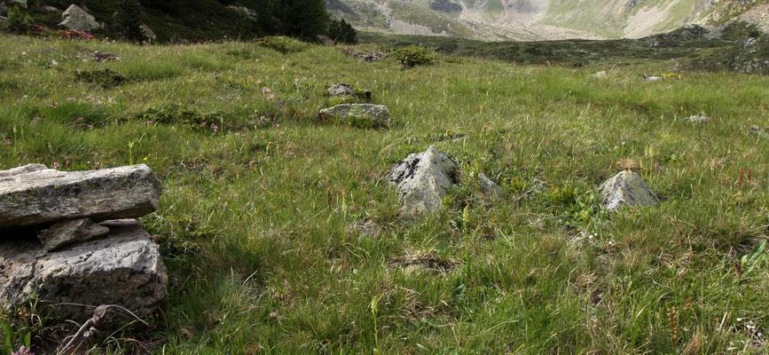 Val da Camp GR, 13.7.2013