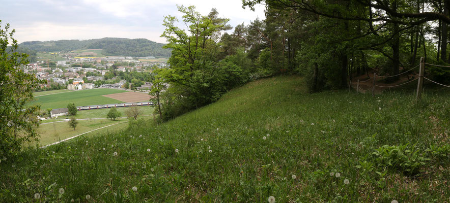 Winterthur ZH, 26.4.2020 (die O. araneola sind jetzt gerade verblüht)