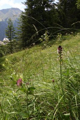 Lumbrein GR, 22.7.2020 (kleine Wiese mit den verschiedensten Orchideen)