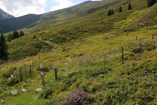 Lumbrein GR, 22.7.2020, Eingezäunte Dactylorhiza-Biotope zum Schutz vor Kühen (mit Durchlassöffnungen für die Wanderer). Im Hintergrund die Alp Cavel