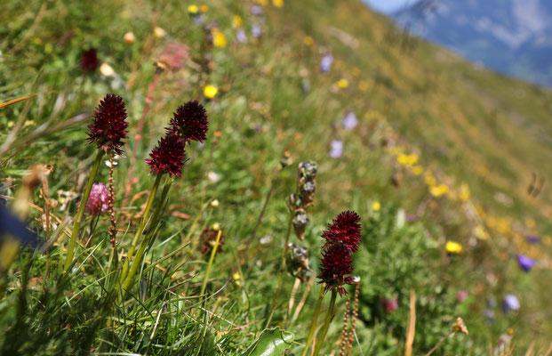 Höhenwanderweg Piz Sezner, Lumbrein, Lumnez GR (2000müM), 20.7.2020