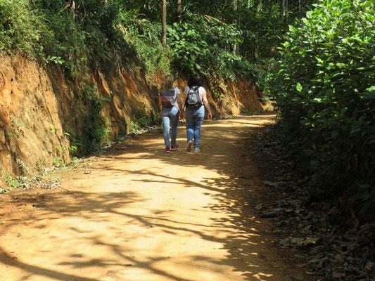 Kleiner Spaziergang durch die Teeplantage