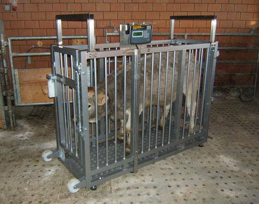 Tierwaage Viehwaage Kalberwaage Vealwaage Fresserwaage Rinderwaage Einzeltierwaage Schweinewaage