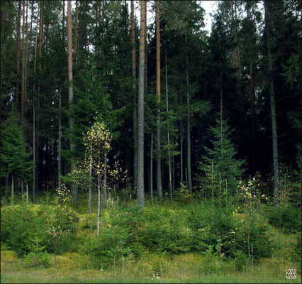 """Билибинский лес. Идрица"" 2005г."