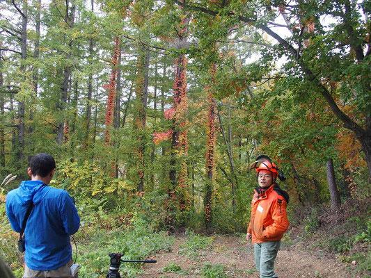 最初は伐倒から。伐採地まで周りの木々を見ながら歩きます。周辺の木々の案内役は、山仕事創造舎の香山さん。