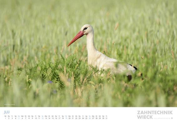 Projekt  |  Kalender Zahntechnik Wieck  |  © JONAS WIECK © MARIO HERZOG © PETER GLASSEN