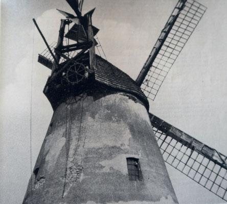 """die Holländer Windmühle """"Höchte"""" um 1900"""