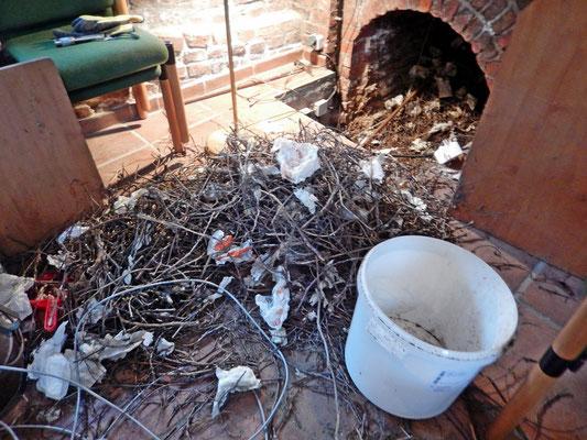 Eintrag durch Dohlen und Tauben im Schornstein