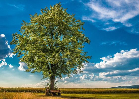 Baum bei Eichelberg