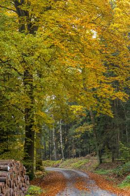 Hessenreuther Wald