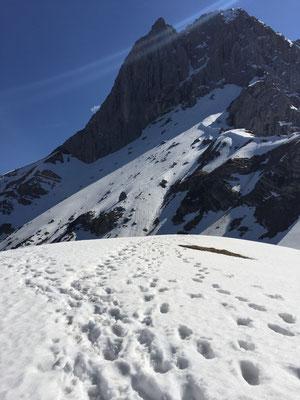 Schneefeld am Lamsenjoch.