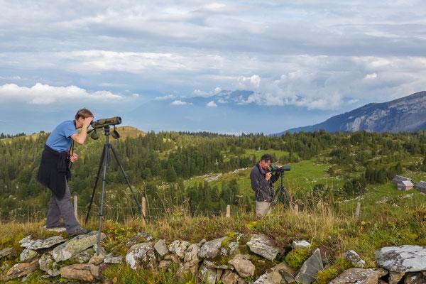 Pascal Parodi und Martin Roost während Bird Race Schweiz 2014 | Gamsalp (Foto: Stephan Trösch)