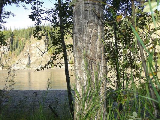 Aussicht von unserer Campsite auf den Yukon