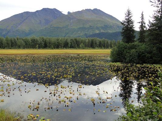 Lillypad Lake