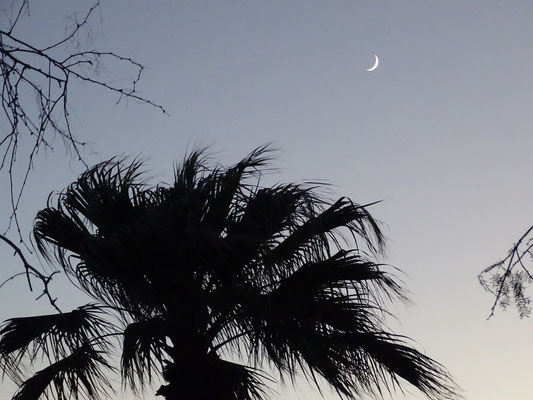 die ersten Palmen in diesem Jahr